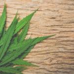 大麻所持で逮捕されている芸能人が多いので、マリファナがどうして禁じられるべきものなのか調べてみた。